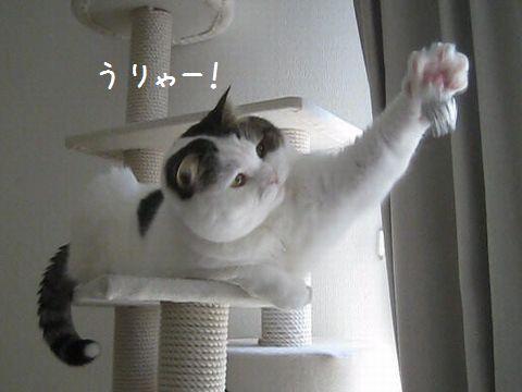 手ぱぁー!