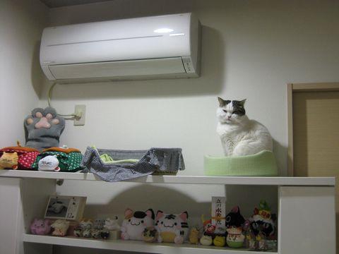 猫コーナーに猫