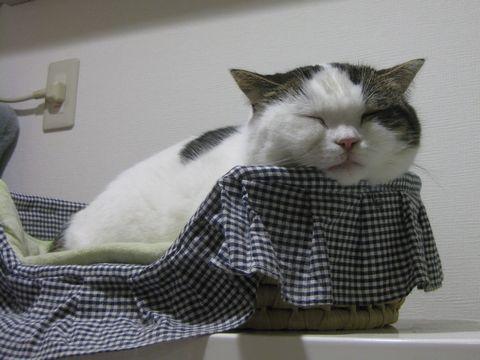 こっちでも寝てみた