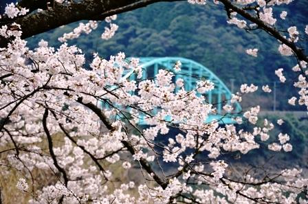 DSC_1150市房ダムの桜