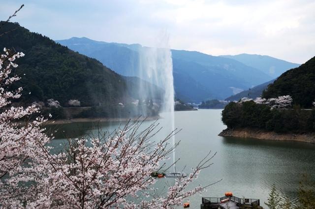 DSC_1174市房ダムの桜と噴水