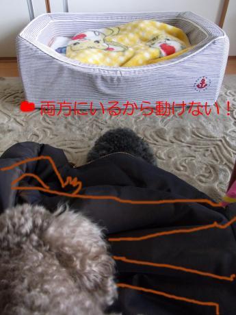 20110104003238d88_convert_20110125172111.jpg