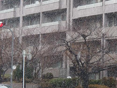 雪2月19日 (1)
