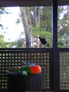 家に来る鳥