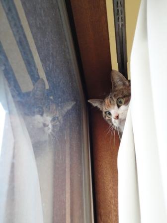 窓際の春巻さん