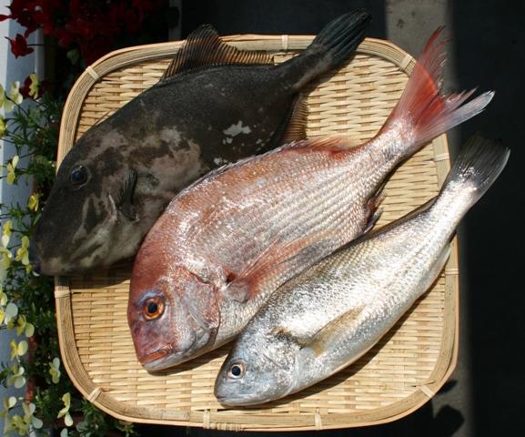 IMG_4420 本日の魚 W