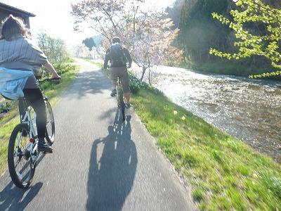 桜の並木道を楽しむ