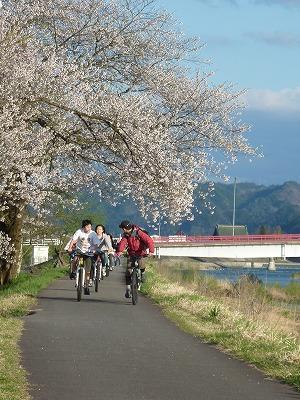 桜並木道サイクリング