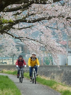 桜並木道を抜ける
