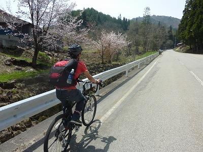 まだ桜が残っています