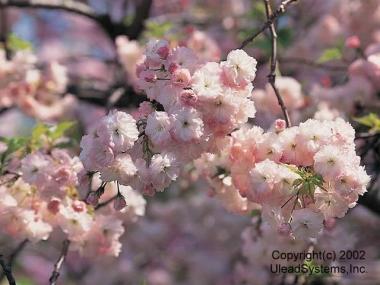 Flower2-007.jpg