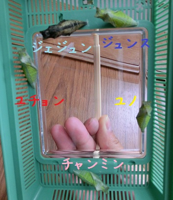 0619-butterfly1.jpg
