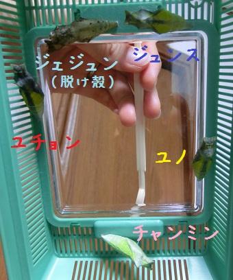 0620-butterfly1.jpg