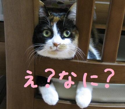 saku-0523.jpg