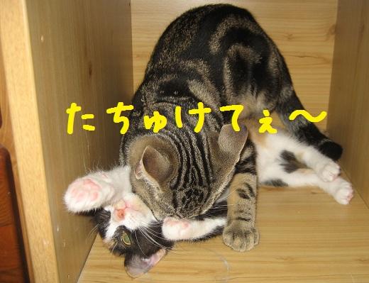 saku090826-2.jpg