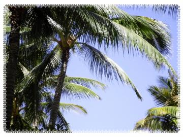SANY5416_0001_convert_20120326132149.jpg