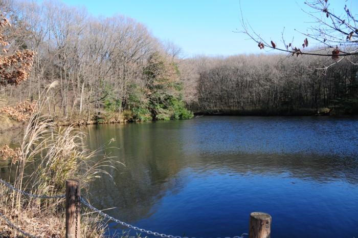 冬枯れの池。