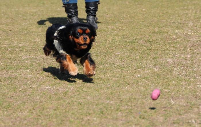 ボール遊びです。