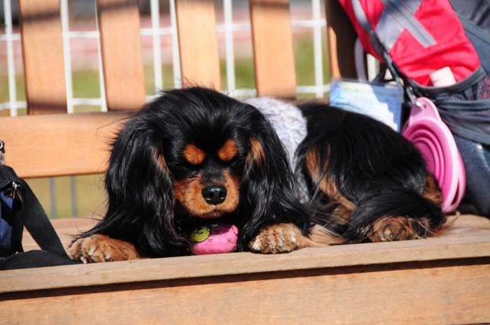 チョットベンチ犬~