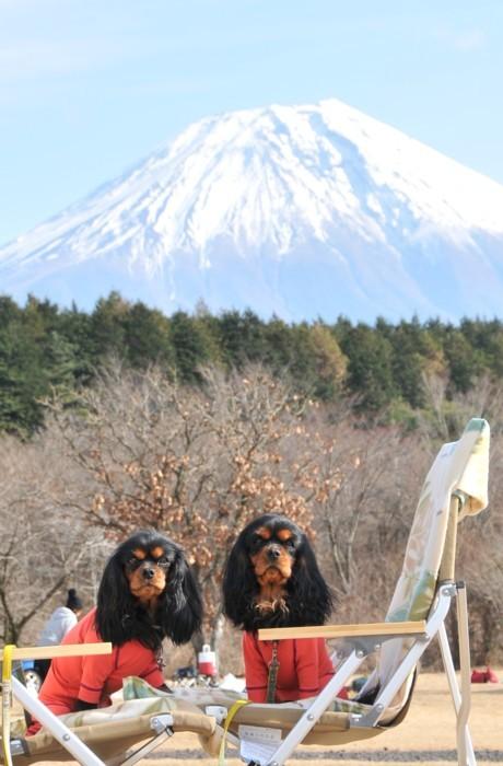 3785富士とコラボ
