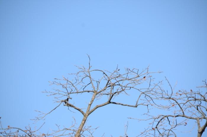 6644柿の木もすっかり実も無くなった。