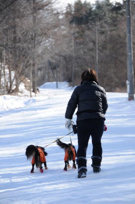 7049雪の散歩~