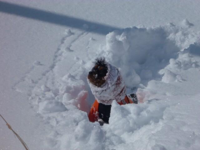 261雪に埋まった芽衣(笑)