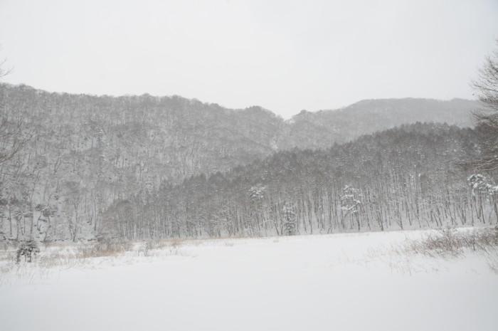 8241凍った沼です。