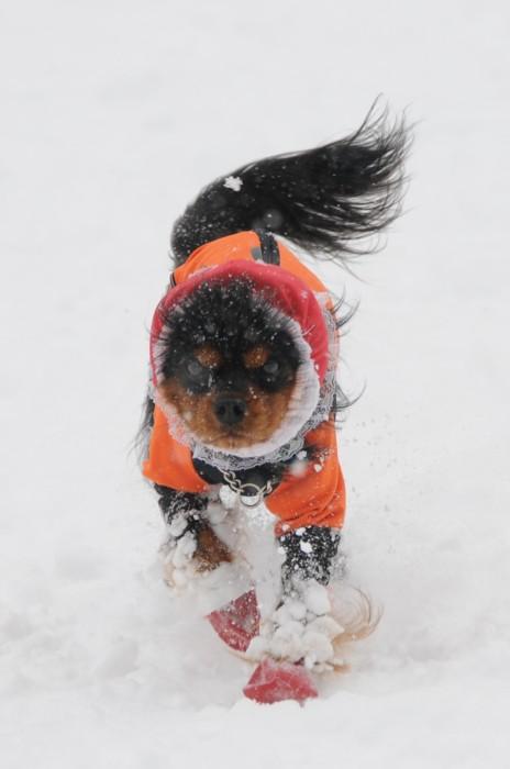 9540雪は、冷たいでしゅ~