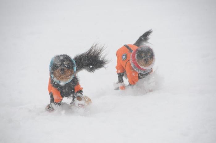 9608雪を蹴散らし~