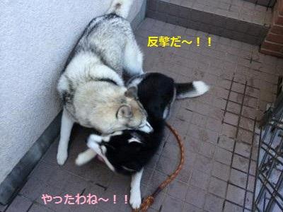 蜀咏悄11_convert_20131116164359