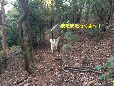 蜀咏悄51_convert_20131122190353