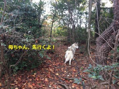 蜀咏悄53_convert_20131122190309