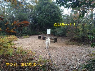 蜀咏悄54_convert_20131122190234