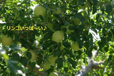 IMGP5515_convert_20130924165552.jpg