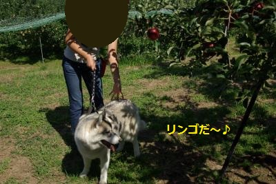 IMGP5518_convert_20130924170111.jpg