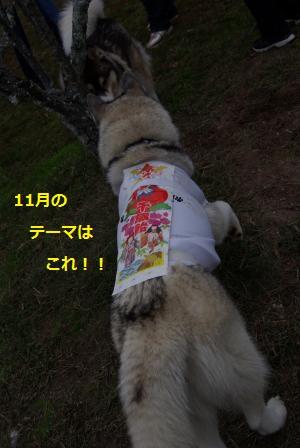 IMGP5872_convert_20131104214627.jpg