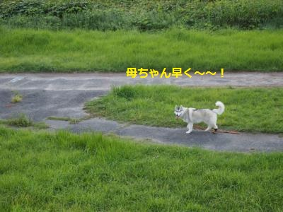 P9107461_convert_20130911142038.jpg