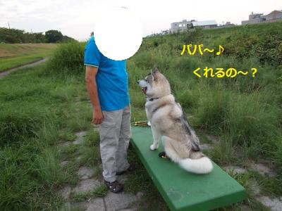 P9107469_convert_20130911142500.jpg