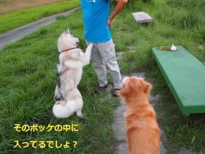 P9107471_convert_20130911142618.jpg