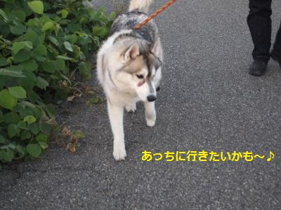 P9167516_convert_20130917214955.jpg
