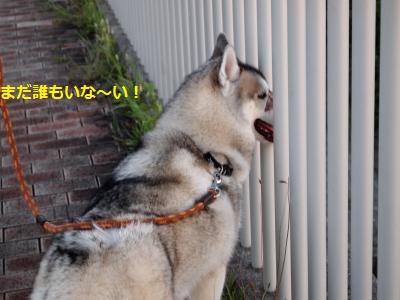 P9167521_convert_20130917220131.jpg