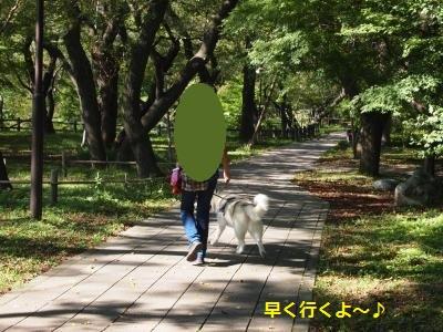 P9207567_convert_20130925213459.jpg