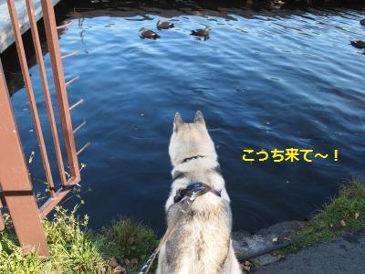 P9207577_convert_20130926165119.jpg