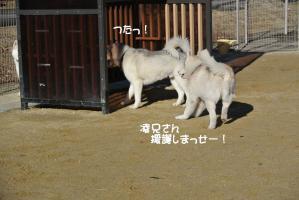 2013年 1月大須(家族写真添付) 009