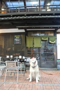 2013年 1月大須(家族写真添付) 058