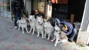 2013年 1月大須(家族写真添付) 094