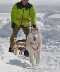 2013年3月ひるがの橇練習 005a