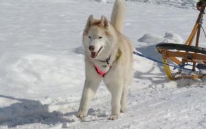 2013年3月ひるがの橇練習 010a
