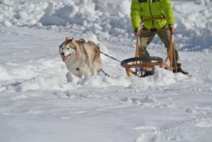 2013年3月ひるがの橇練習 011